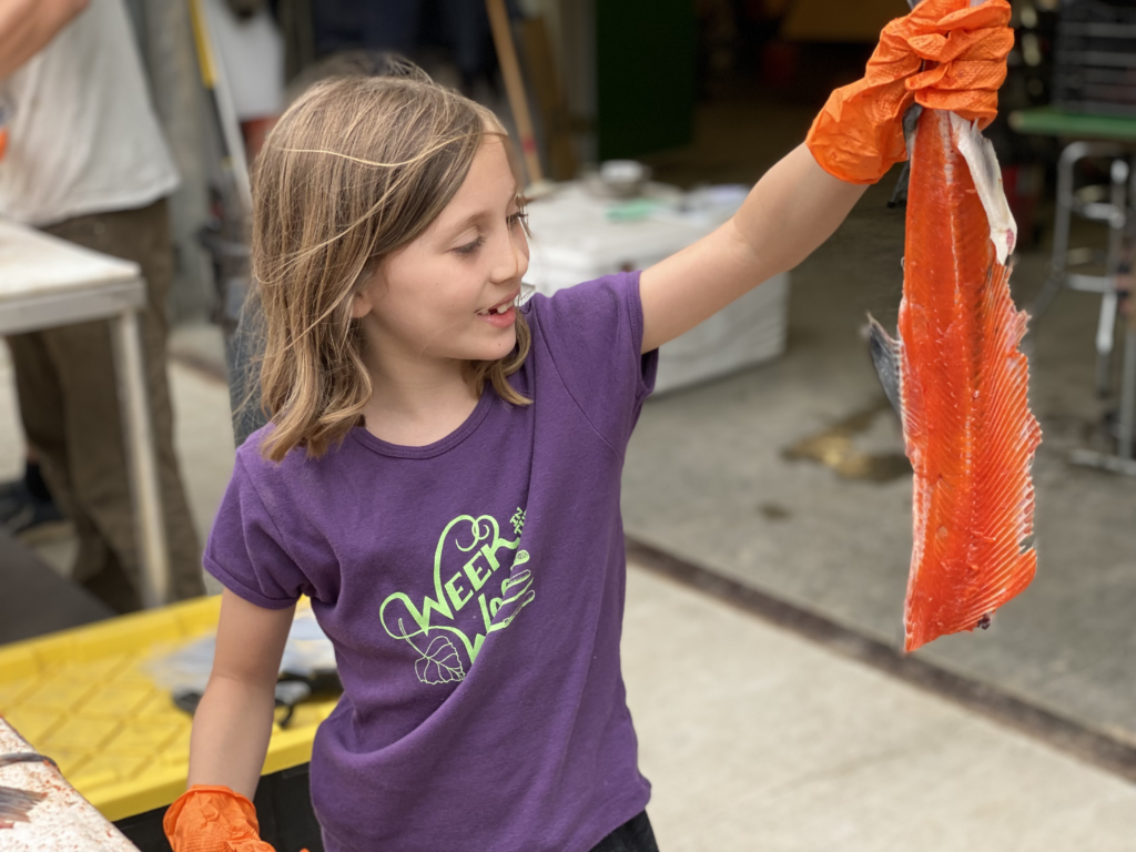 A Copper River Red Salmon carcass harvested and ready to process.